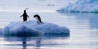 Deux manchots Adélie sur un fragment d'iceberg